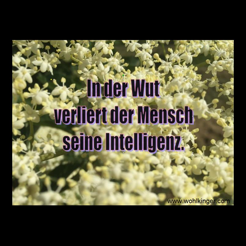 Zitate & Sprüche zum Leben - Website von August Wohlkinger