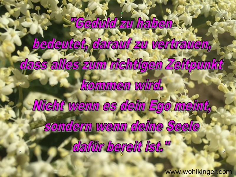 Ego Zitate Schöne Zitate Sprüche Und Weisheiten 2019 10 15