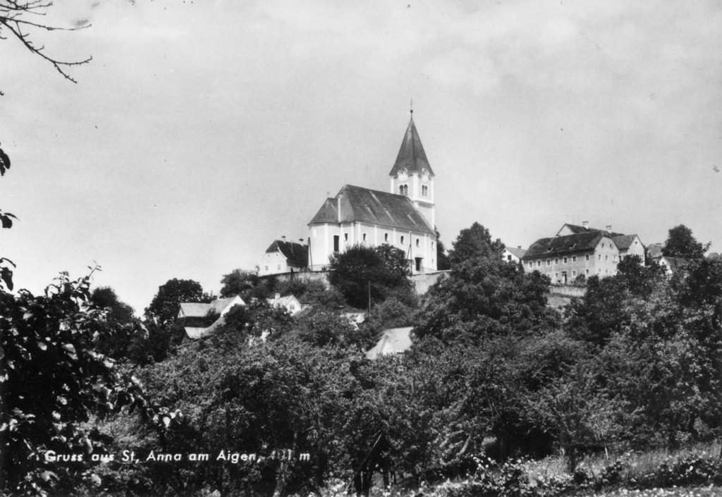 St. Anna am Aigen - blhender Holunder - Graz / Styria
